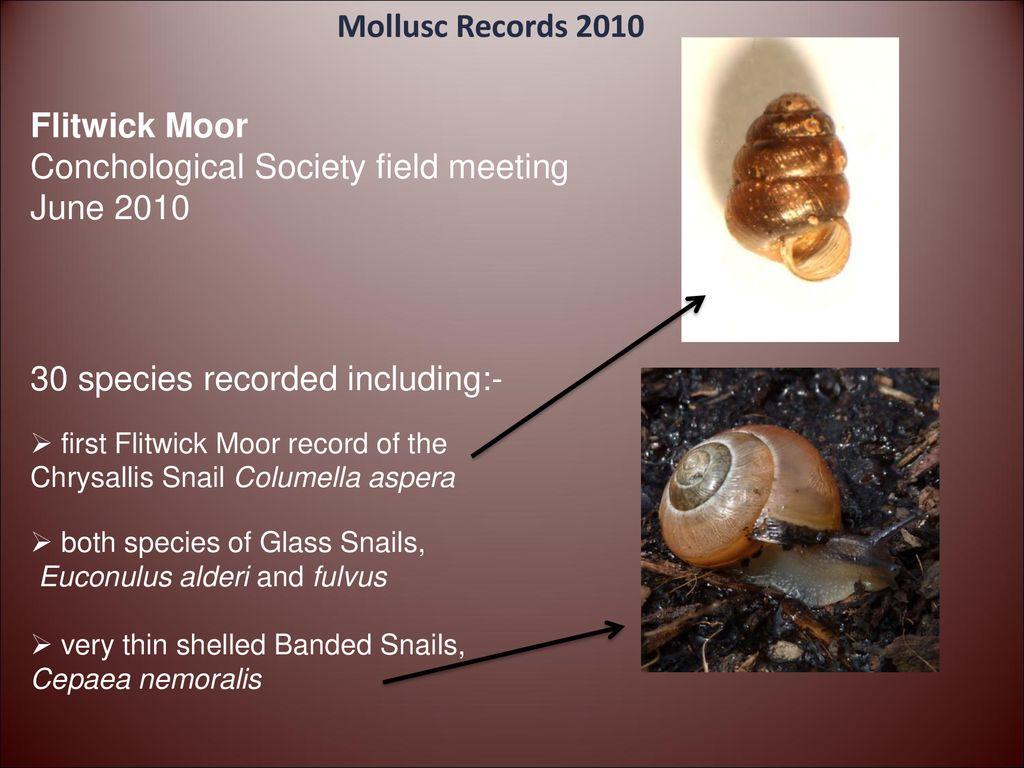 Molluscs 2010 Peter Topley