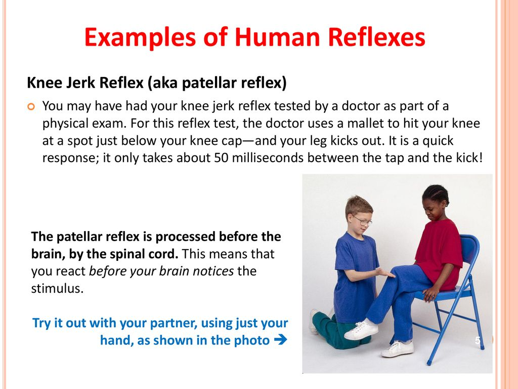 Reflecting on Reflexes - ppt download