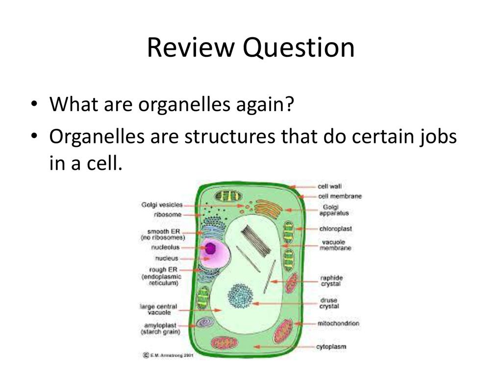 What are organelles