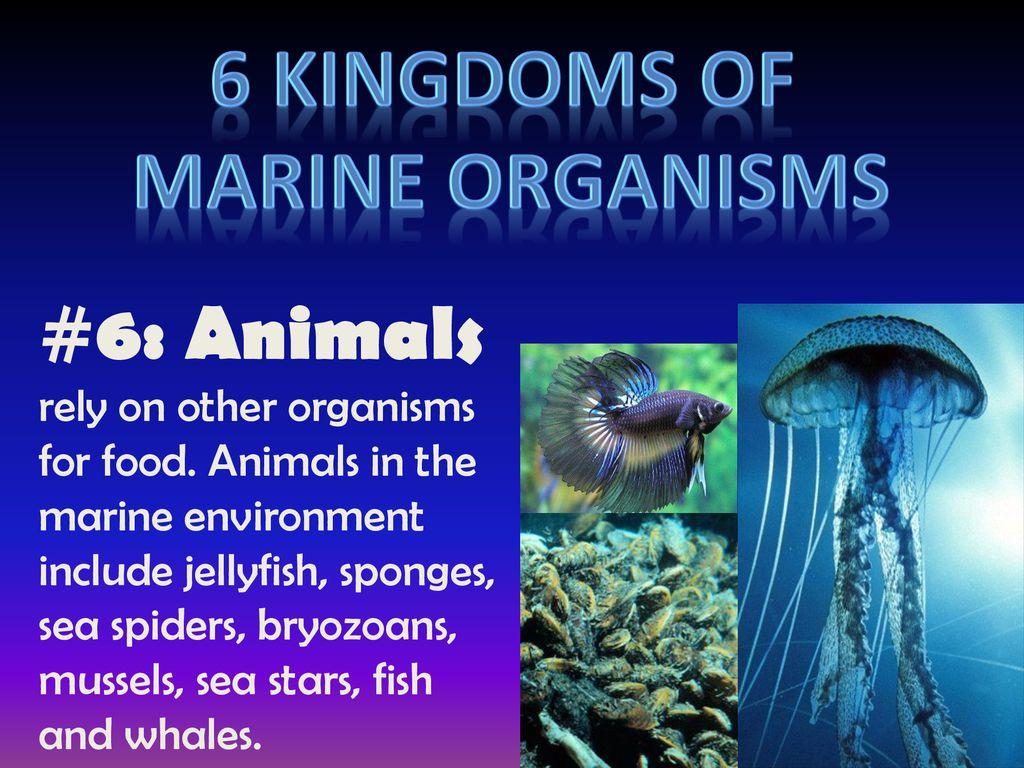 6 Kingdoms Of Marine Organisms