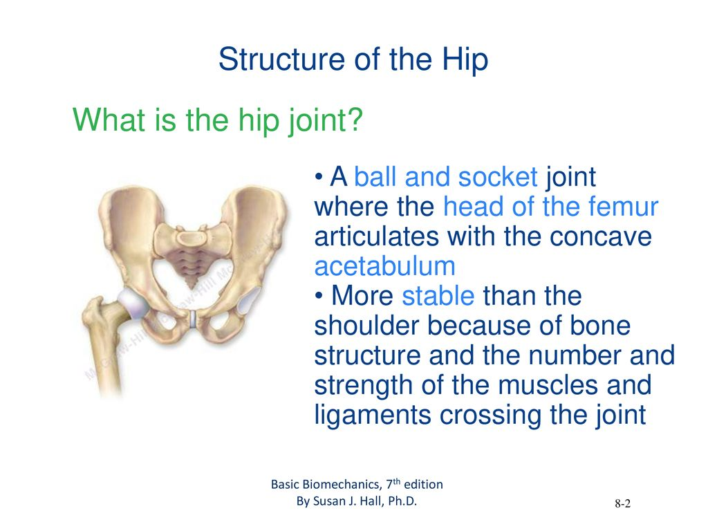 The Biomechanics Of The Human Lower Extremity Ppt Download
