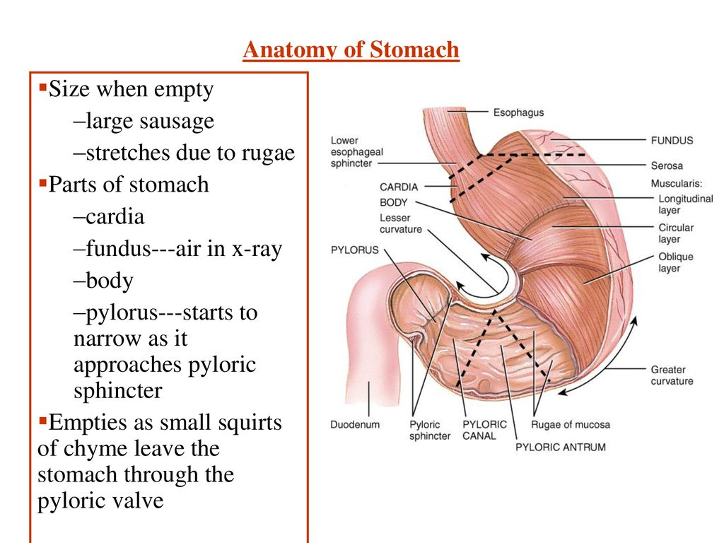 Anatomy & Physiology of the Digestive System - ppt download