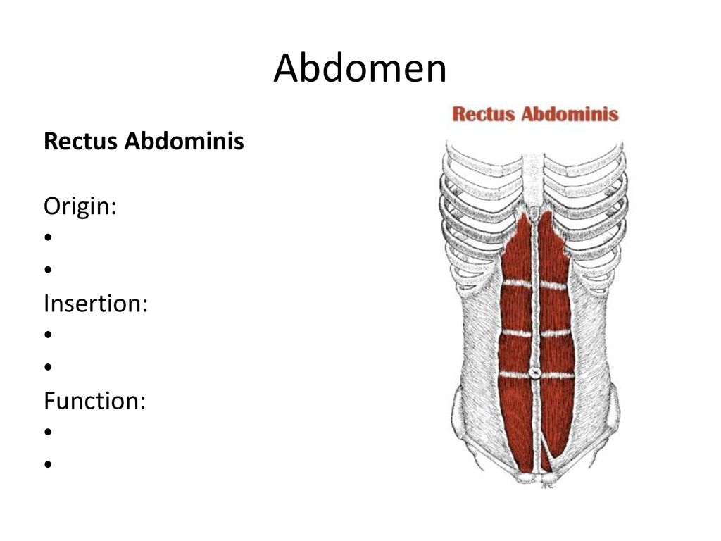 Muscles Of The Human Body Ppt Download