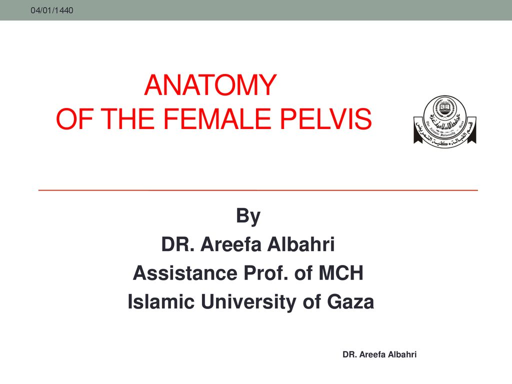Anatomy of the Female Pelvis - ppt download