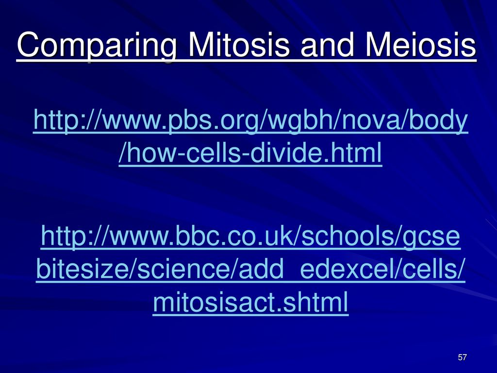 The processes of the cell ppt download comparing mitosis and meiosis ccuart Gallery