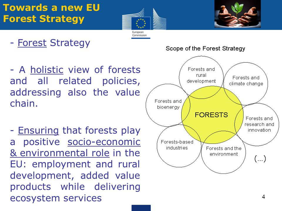 Towards a new EU Forest Strategy - Forest Strategy