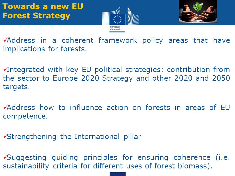 Towards a new EU Forest Strategy