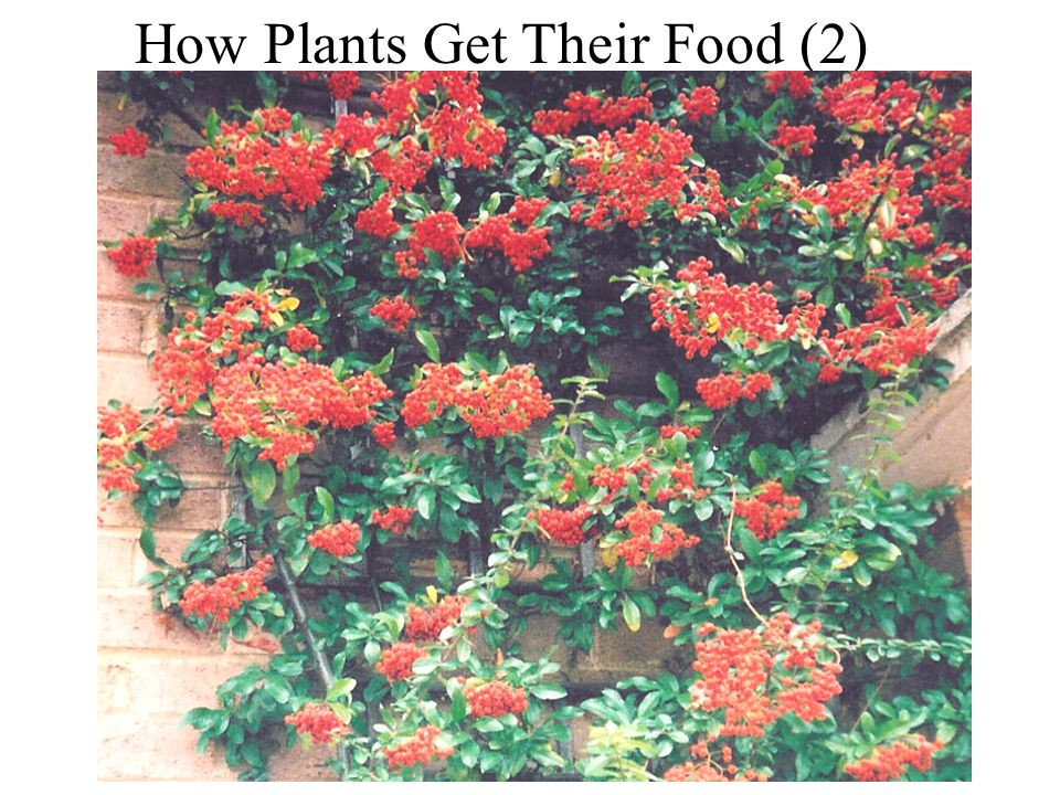 How Plants get their Food (2)