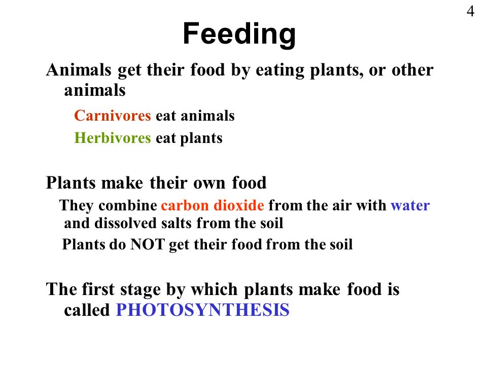 Feeding Animals get their food by eating plants, or other animals