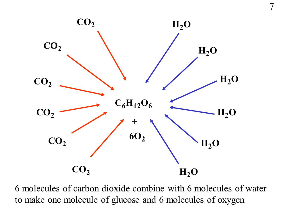 6 molecules of carbon dioxide combine with 6 molecules of water