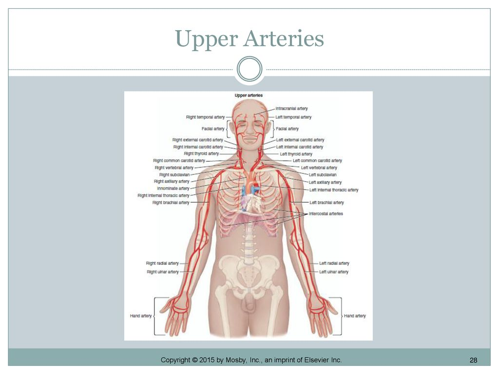 Chapter Nine Circulatory System Ppt Download