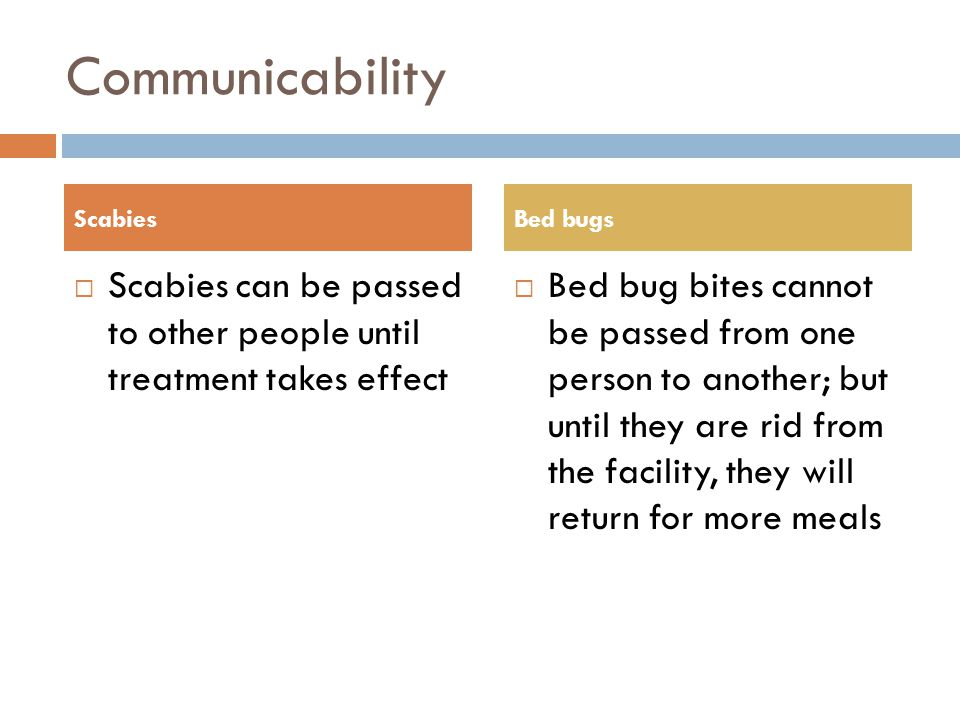 Communicability Scabies. Bed bugs. Scabies can be passed to other people until treatment takes effect.