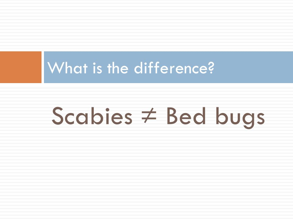 What is the difference Scabies ≠ Bed bugs