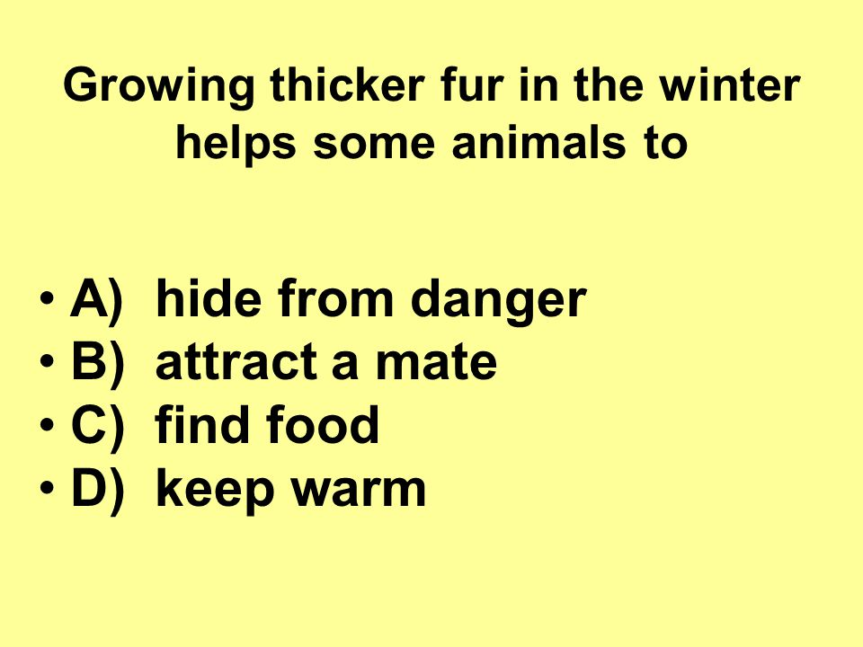 Growing thicker fur in the winter helps some animals to
