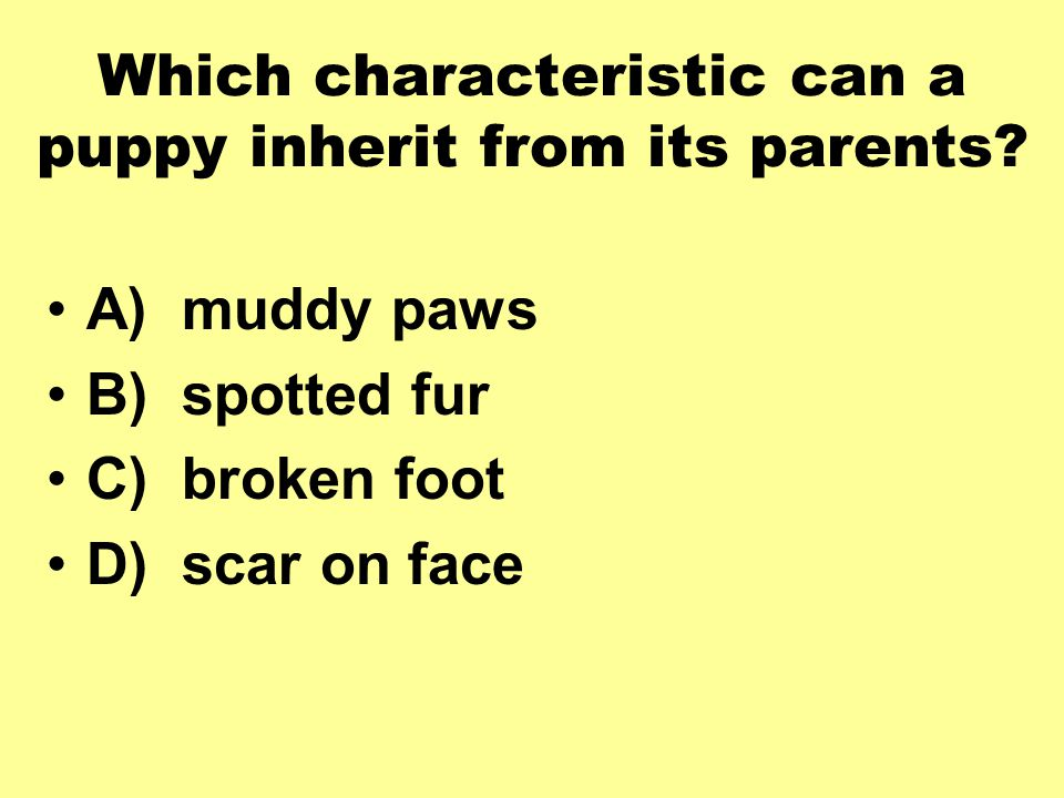 Which characteristic can a puppy inherit from its parents