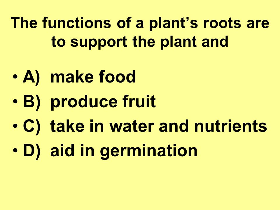 The functions of a plant's roots are to support the plant and