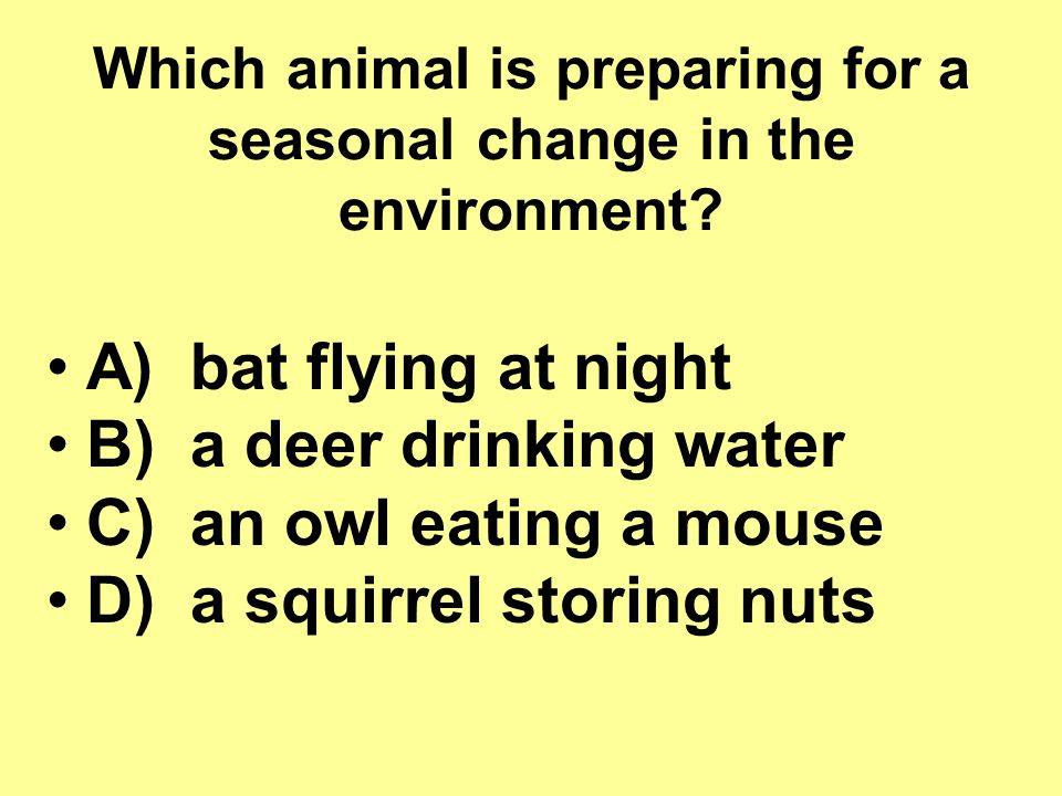 Which animal is preparing for a seasonal change in the environment