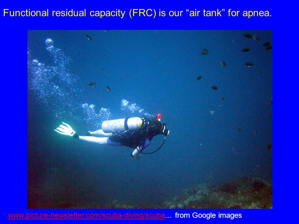 Functional residual capacity (FRC) is our air tank for apnea.