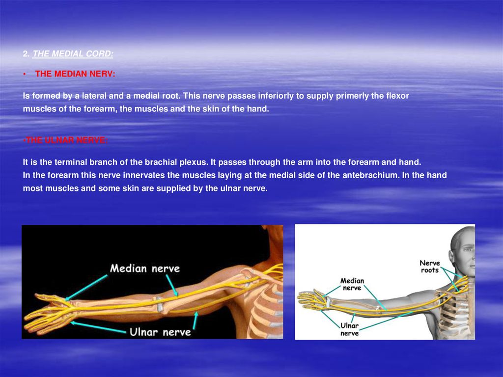 Upper limb Anna L. Kiss Department of Anatomy, Histology and ...