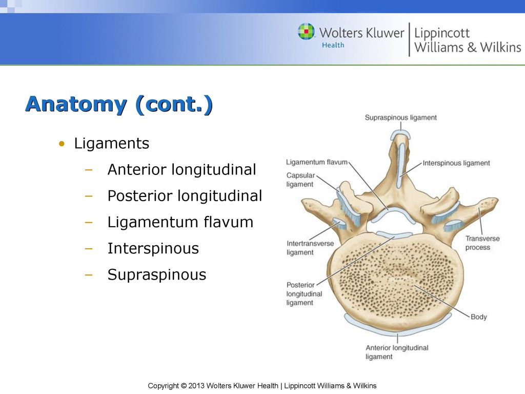 Cervical and Thoracic Spinal Conditions - ppt download