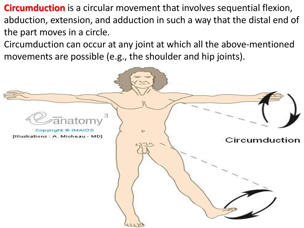 Terminology in anatomy General information on the systems - ppt download