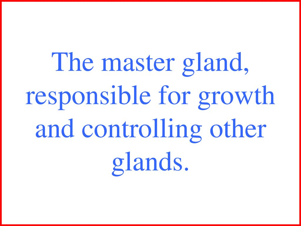 gland responsible for growth