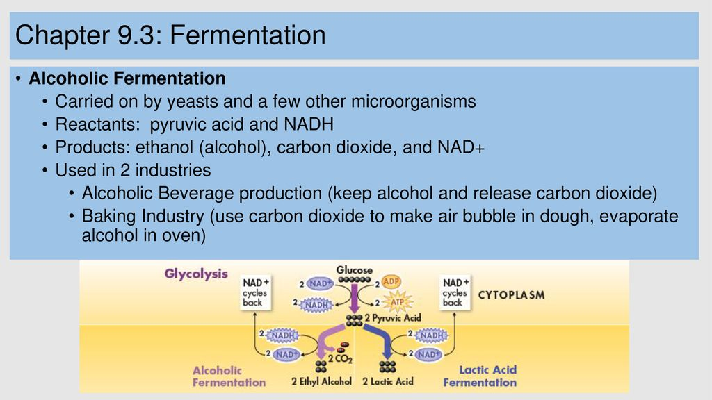 Cellular Respiration And Fermentation Ppt Download