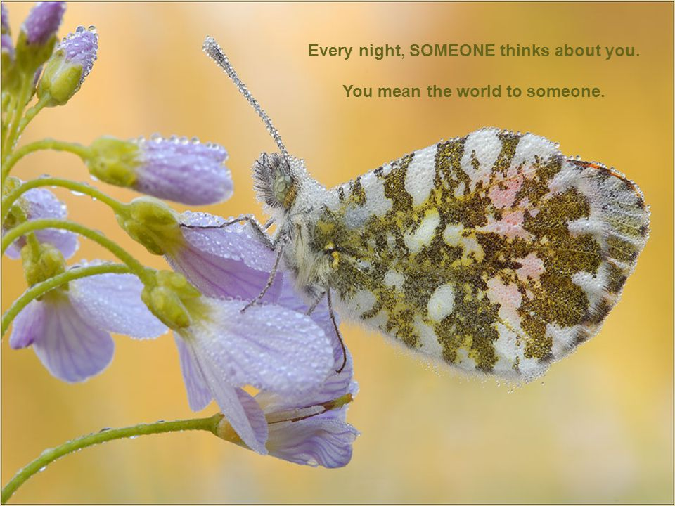 Every night, SOMEONE thinks about you. You mean the world to someone.