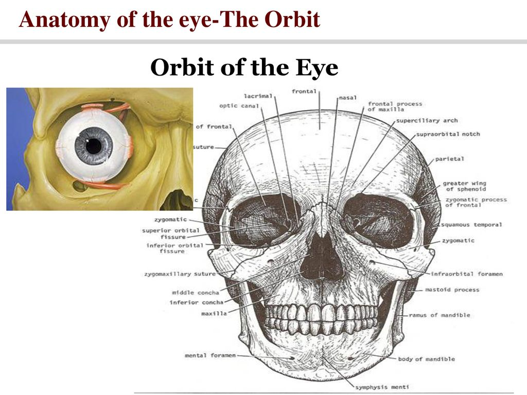 The EYE SLO (s): Essential Question: - ppt download