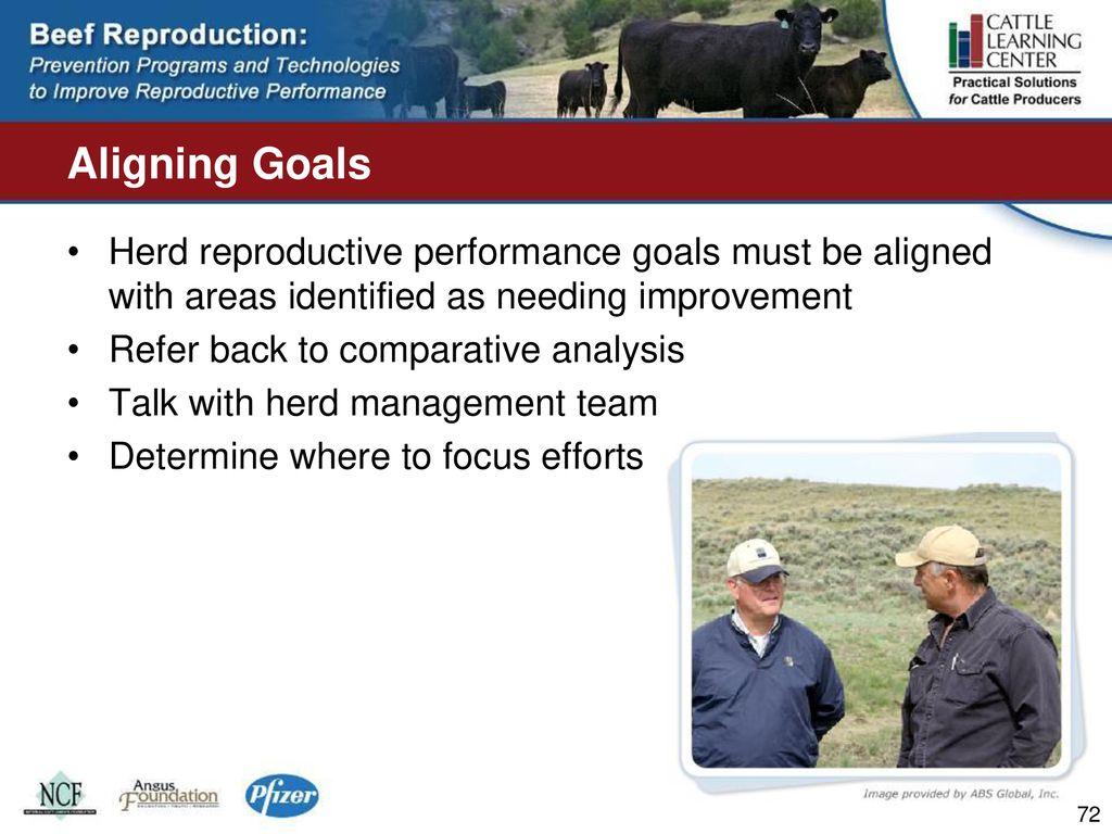 National Cattlemen's Beef Association - ppt download