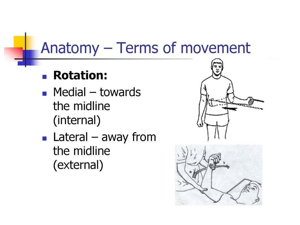 Part 1 Anatomical Overview Bones Joints Anatomical Positions