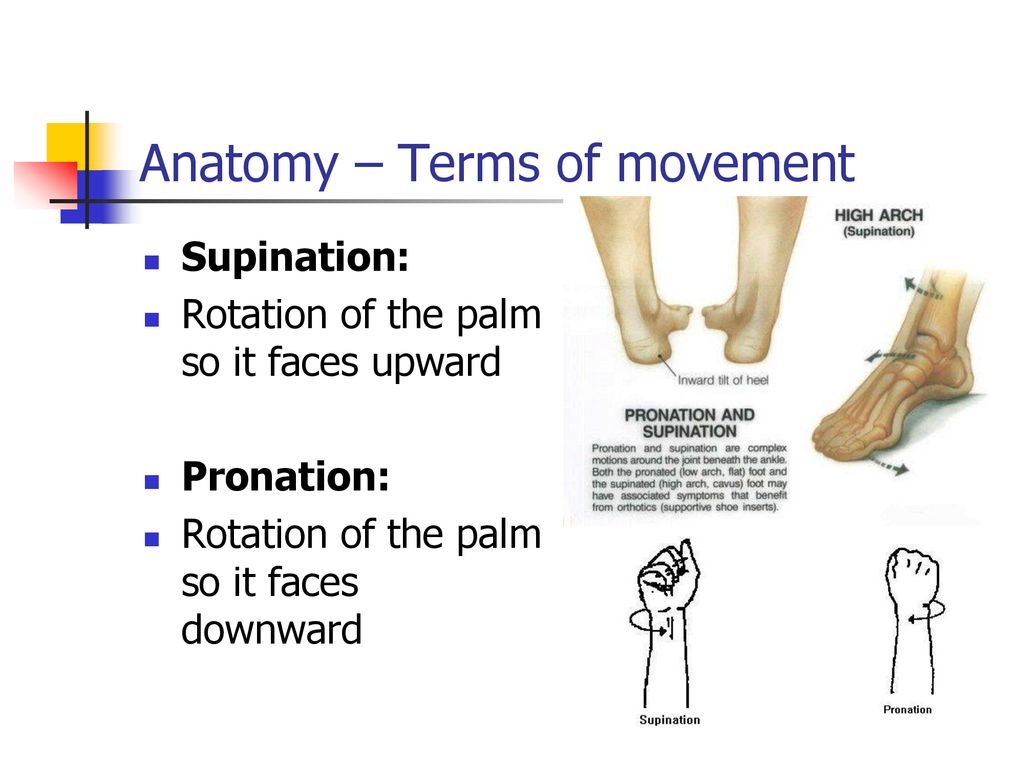 Part 1 Anatomical Overview – Bones, Joints, Anatomical positions ...
