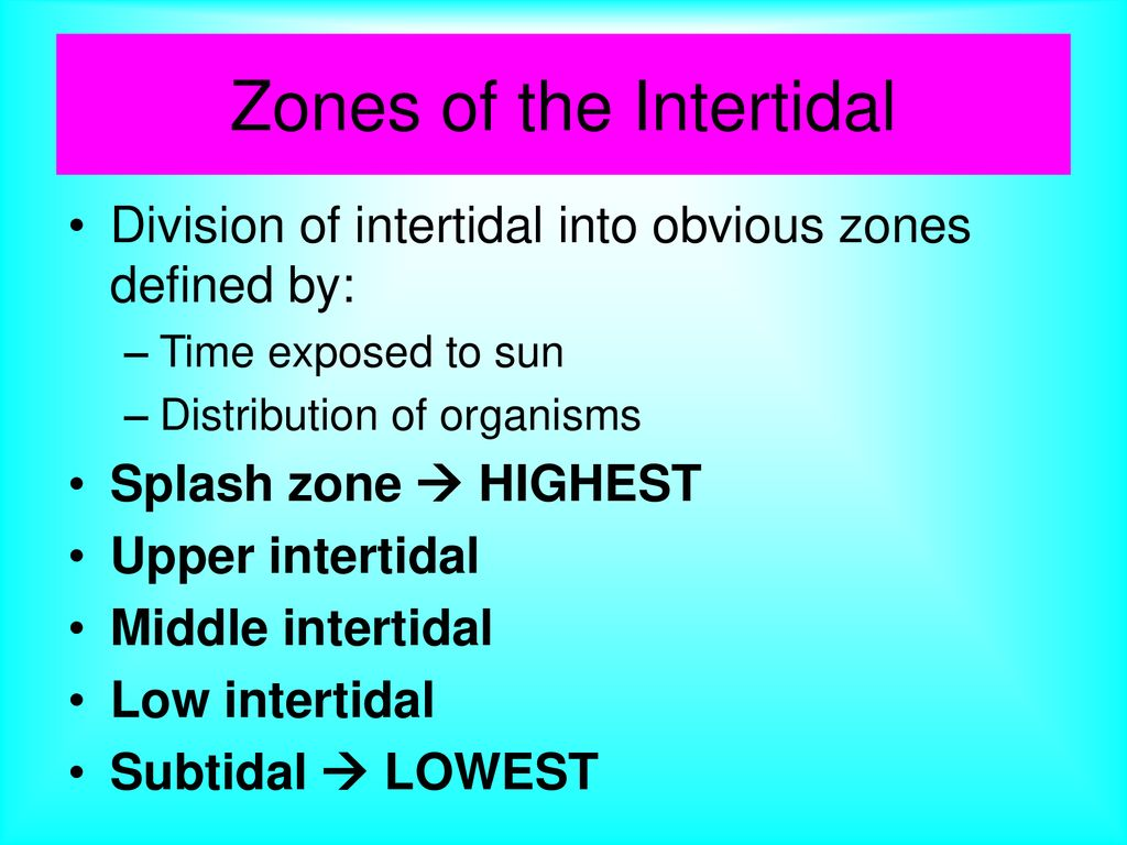 where is the intertidal zone? - ppt download