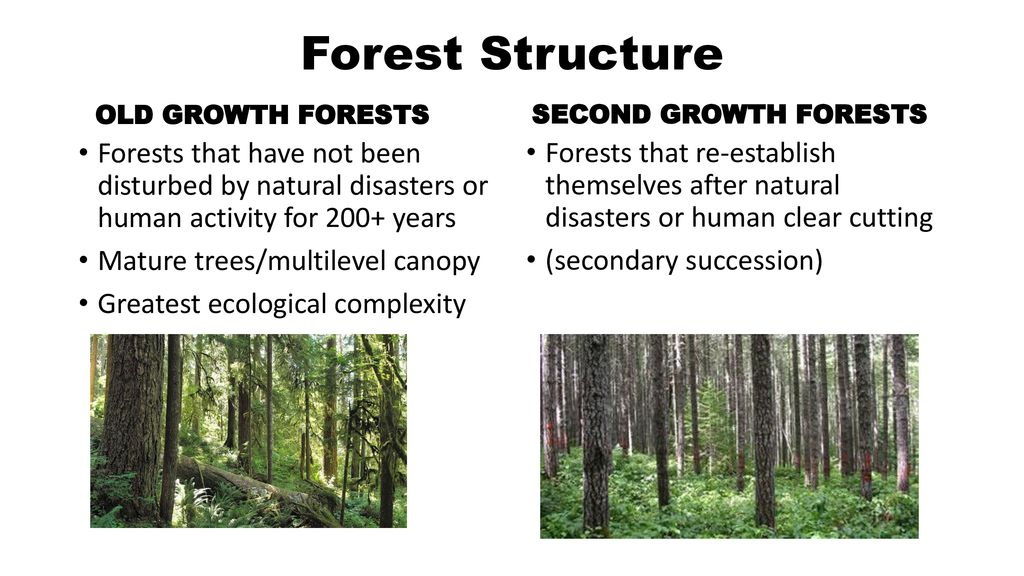 Forestry  - ppt download