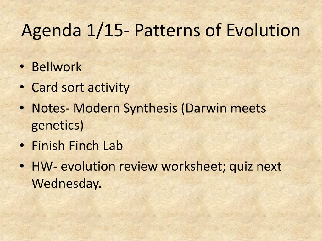 Agenda 11116 Evolution And Diversity Ppt Download