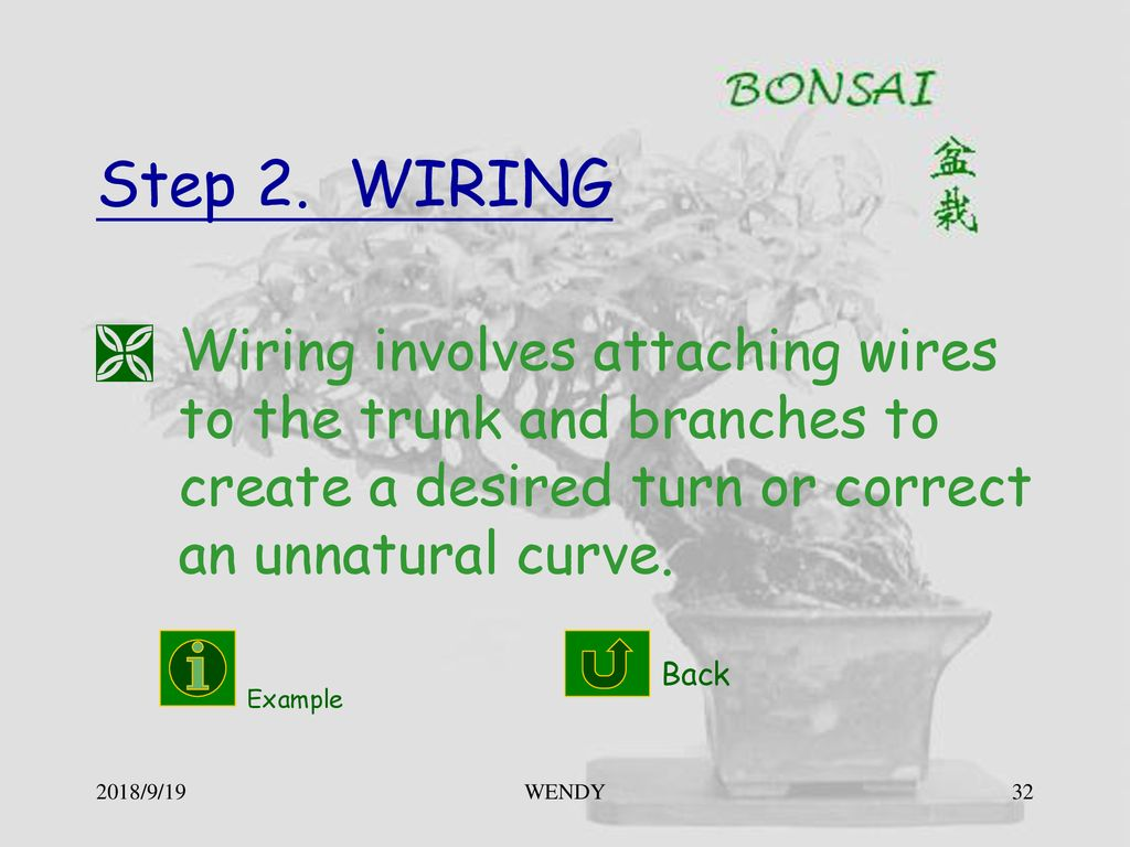 Little Tree In The Pot Bonsai Ppt Download Wiring Branches 32