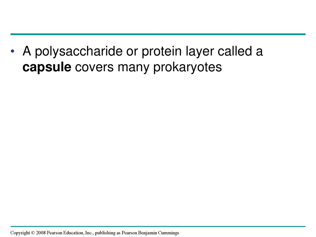 Chapter 27 Bacteria And Archaea Ppt Download Fimbriae Prokaryotic Cell Edition 10 A Polysaccharide Or Protein Layer Called Capsule Covers Many Prokaryotes