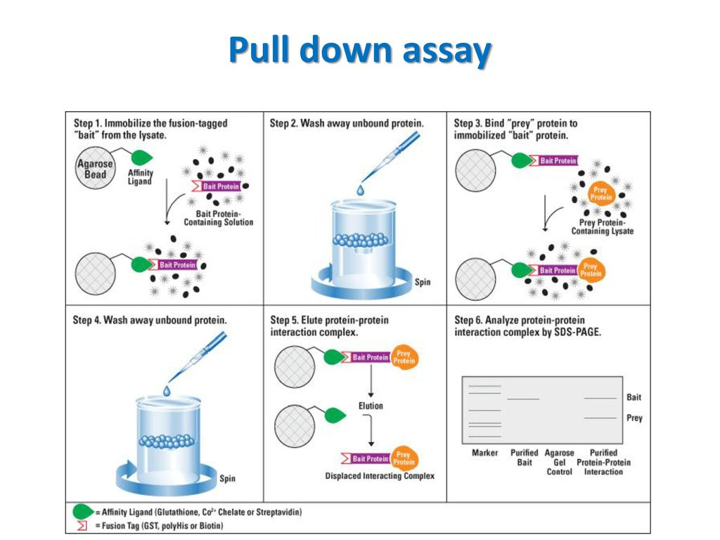 Protein Protein Interaction Ppt Download