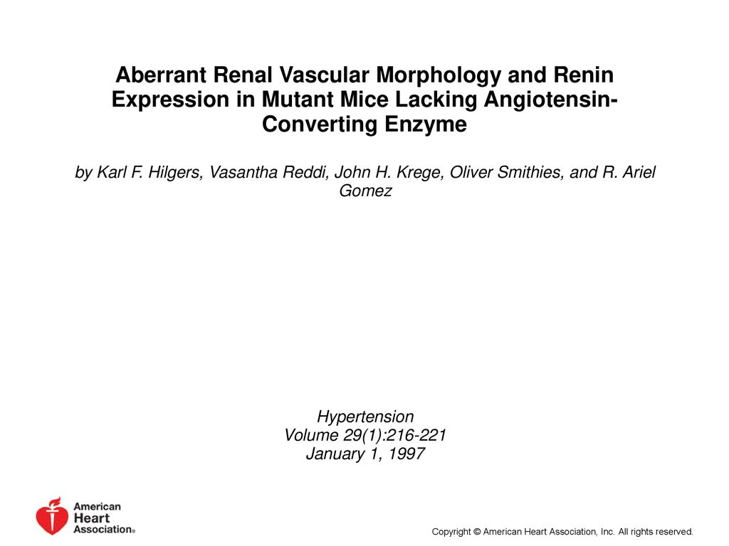 Aberrant Renal Vascular Morphology and Renin Expression in
