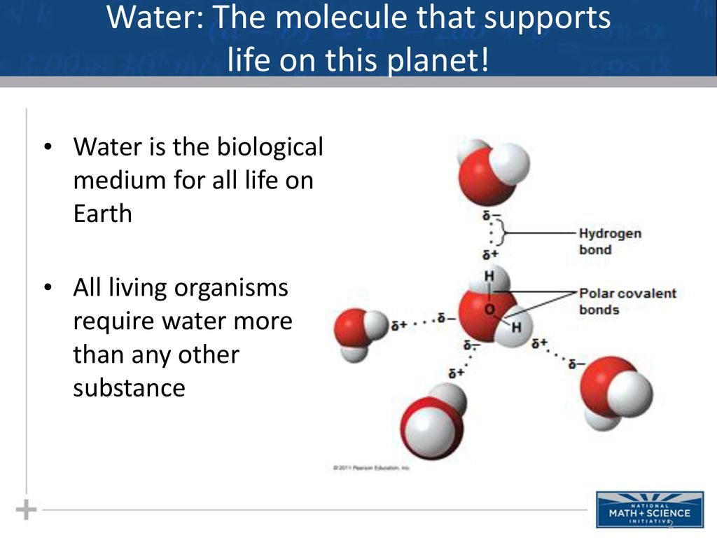 Water in human life. Biological and environmental significance of water 76