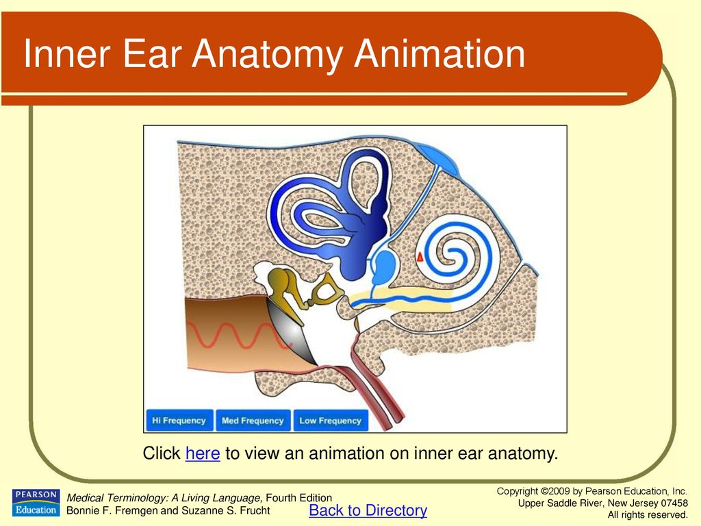 Chapter 5 Special Senses: The Eye and Ear. - ppt download