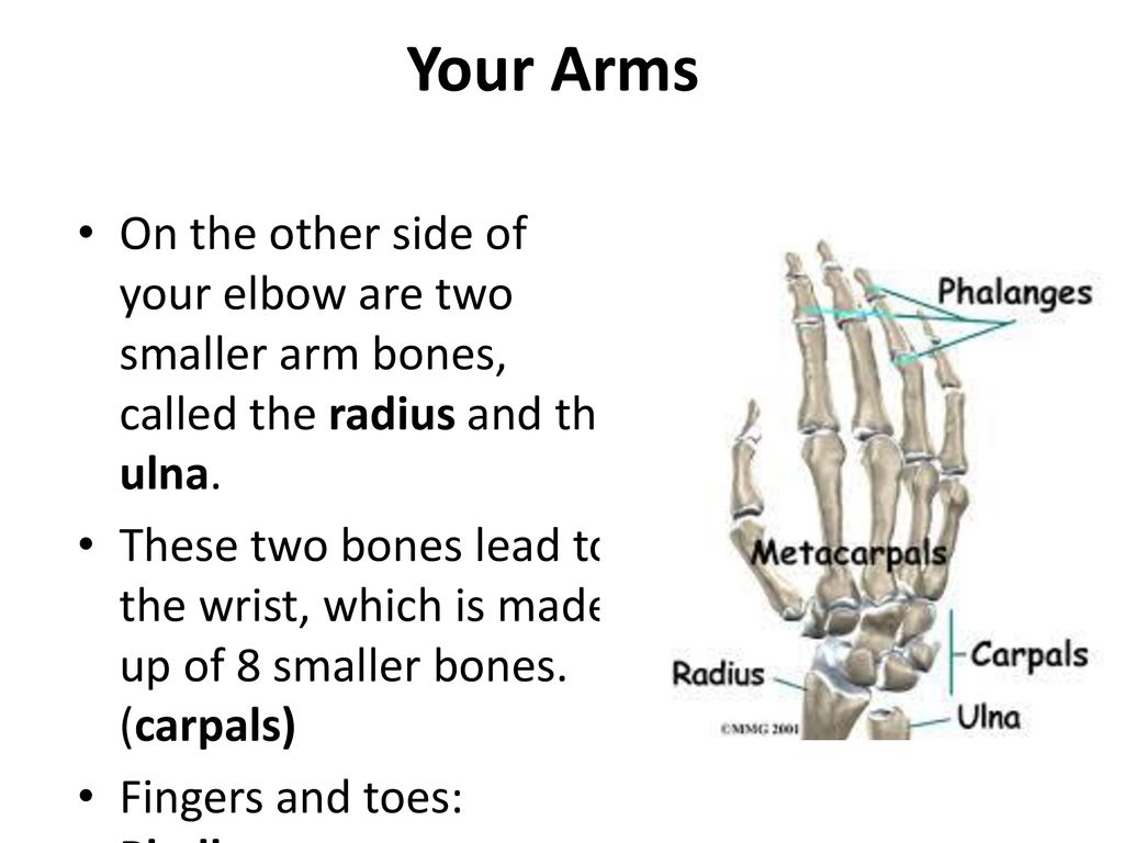 The Human Body Systems The Skeletal System  - ppt download