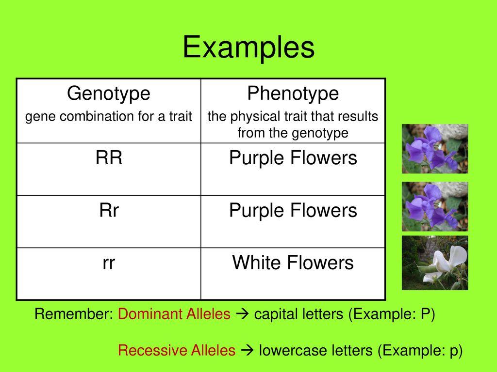 Mendelian Genetics Simple Patterns Of Inheritance Ppt Download
