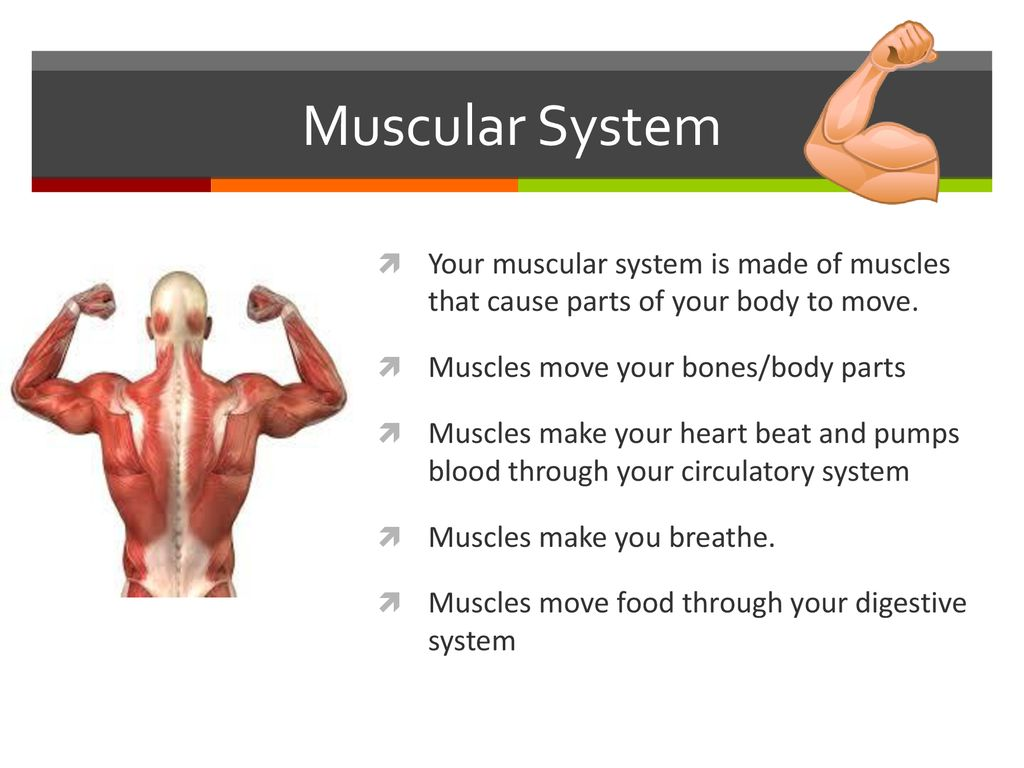 Human Body Organs And Functions Ppt Download