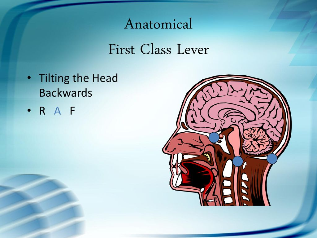 Levers in the Human Body - ppt download