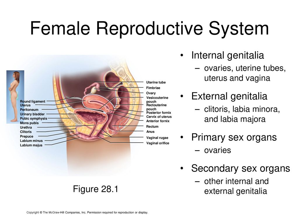Human Anatomy & Physiology II - ppt download