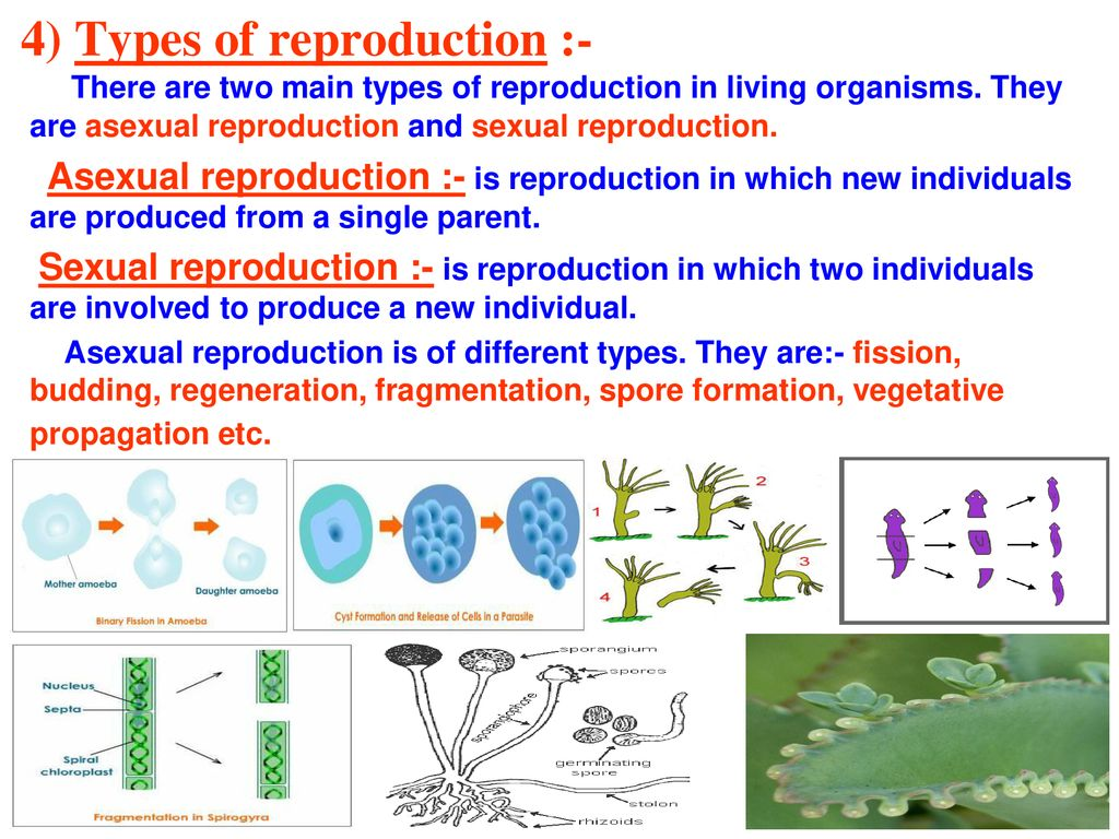 What types of organisms reproduce sexually photos 10
