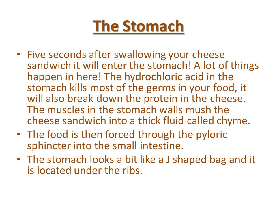 a journey of a cheese sandwich