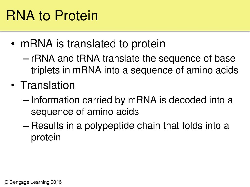 Chapter 9 From DNA to Protein - ppt download