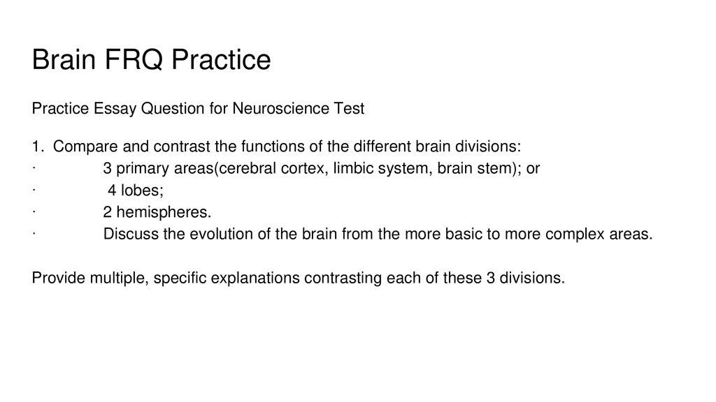 neuroscience essay